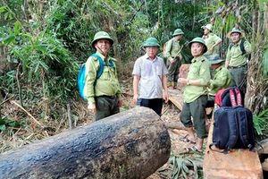 Phó Chủ tịch tỉnh Quảng Nam thị sát nơi rừng 'đổ máu'
