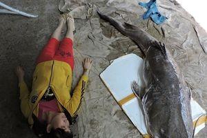 Đắk Lắk: Ngư dân câu được cá 'khủng' nặng gần 1 tạ
