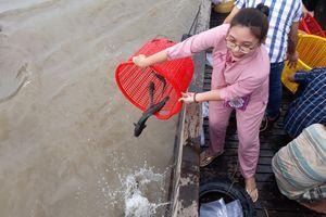 Thả hơn 2 tấn cá, tôm giống xuống sông Cổ Chiên
