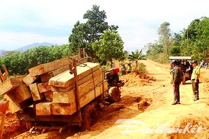 Đắk Lắk đình chỉ công tác Giám đốc Công ty lâm nghiệp để mất rừng