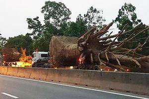 Phát hiện 3 xe chở 3 cây gỗ khổng lồ qua Thừa Thiên - Huế