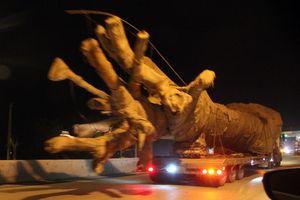 Bắt 3 xe chở cây 'quái thú' khủng, phạt hơn 80 triệu đồng