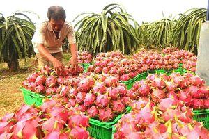 Trái cây, rau củ xuất khẩu sang Trung Quốc phải truy xuất nguồn gốc