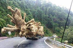 Kiểm lâm truy nguồn gốc cây 'quái thú' nghênh ngang trên đường