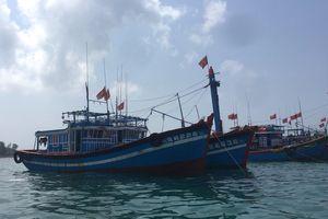 Ngư dân Lý Sơn liên tiếp bội thu 'lộc biển'