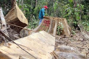 Lại xảy ra 2 vụ phá rừng quy mô lớn