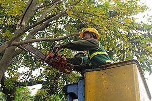 Hà Nội: Kiểm tra, cắt tỉa cây xanh đảm bảo an toàn trong mùa mưa bão 2018