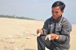 Quảng Trị: Cá chết dạt vào bờ cả cây số