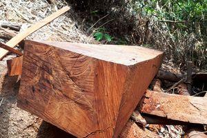 Ba vụ phá rừng ở Quảng Nam: Đình chỉ 6 cán bộ bảo vệ rừng