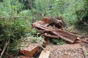 Tạm đình chỉ hàng loạt cán bộ kiểm lâm vì để xảy ra phá rừng