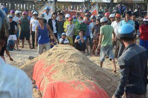 Đưa xác cá voi nặng 2,5 tấn vào bờ biển Bình Thuận an táng