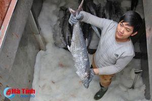 Ngư dân Hà Tĩnh thu hơn 540 tỷ đồng từ vụ cá Bắc