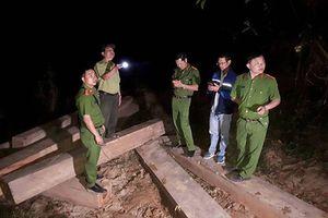 Đình chỉ công tác Giám đốc công ty lâm nghiệp để xảy ra khai thác gỗ