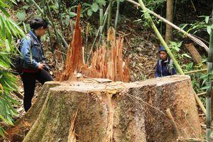 Để mất rừng, hàng loạt cán bộ kiểm lâm bị đình chỉ công tác