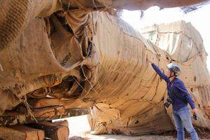 Thông tin mới về vụ 3 cây 'khủng' bị giữ ở Huế