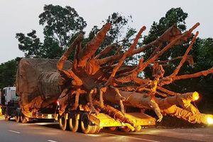 Phó thủ tướng giao Bộ Công an làm rõ vụ cây khổng lồ trên quốc lộ
