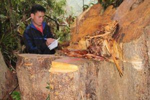 Quảng Nam: Đình chỉ công tác 6 cán bộ kiểm lâm liên quan vụ phá rừng