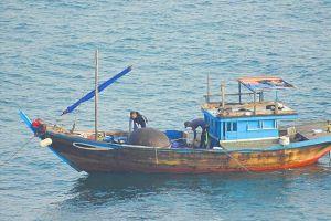3 cha con thả thuốc nổ đánh cá trên biển Đà Nẵng
