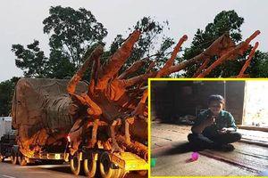 Cây 'quái thú' vi vu trên quốc lộ: Nghi làm giả hồ sơ nguồn gốc