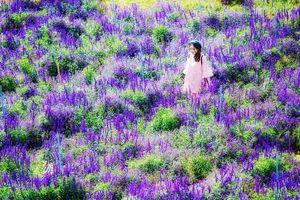 Giới trẻ thích thú với hành trình rong ruổi săn ảnh cánh đồng hoa