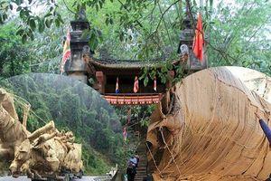 Các cây 'quái thú' được vận chuyển ra Hà Nội: Có đi 'nhầm' vào tư dinh?