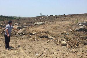 Vụ 3 cây 'khủng' bị tạm giữ tại Huế: Phủ nhận khai thác 2 cây?