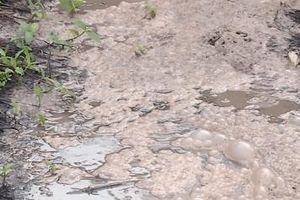 Doanh nghiệp 'bức tử' môi trường bị xử phạt 260 triệu đồng