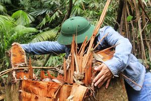 Quảng Nam yêu cầu điều tra vụ phá rừng ở H.Nam Giang theo án điểm 2018