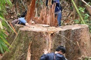 Quảng Nam: Kiểm tra rừng đặc dụng Sông Thanh bị tàn phá
