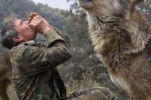 TBN: 'Người rừng' sống với chó sói 12 năm khổ sở khi sống với người