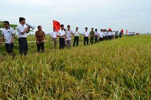 Hà Nội đẩy mạnh phát triển các loại cây trồng chủ lực