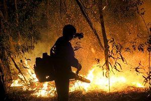Hơn 100 người trắng đêm chữa cháy ở khu bảo tồn thiên nhiên Tà Cú