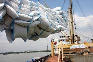 Xuất khẩu gạo nếp lại bị ép giá