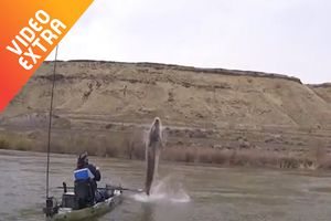 Khoảnh khắc chứng kiến 'thủy quái' trên sông Snake