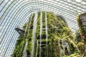 Sạch đẹp thôi chưa đủ, Singapore còn chi hàng nghìn tỷ đồng xây dựng vườn nguyên sinh khổng lồ tuyệt đẹp