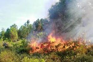 Rừng đối mặt với nguy cơ cháy cấp cao nhất