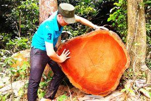 Quảng Nam: Do nước bạn đóng cửa rừng và nhu cầu làm nhà tăng cao nên rừng bị tàn phá?
