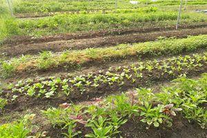 Vườn rau sạch RauBB.vn: Công nghệ là cải tiến đơn giản... nhưng thiết thực