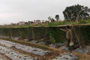 Hàng trăm gốc mướp đắng của 2 hộ dân ở Thanh Hóa bị kẻ xấu phá hoại