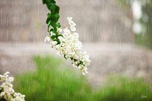 Thời tiết ngày 11/4: Hà Nội mưa, TP.HCM nắng nóng