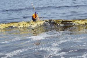 Đà Nẵng: Nước biển có màu lạ là do tảo
