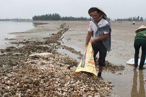 Hà Tĩnh: Nghêu chết hoàng loạt, người dân lao đao