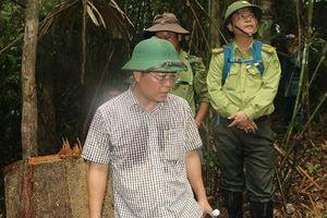 Quảng Nam: 'Xẻ thịt' tan hoang rừng già, bao giờ lâm tặc phải trả giá?