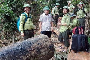 Kiểm lâm Quảng Nam quyết tâm làm 'trong sạch nội bộ' sau hàng loạt vụ phá rừng