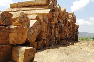 Kon Tum: Kết hợp vận chuyển gỗ tang vật, kéo thêm hơn 84 m3 gỗ không rõ nguồn gốc