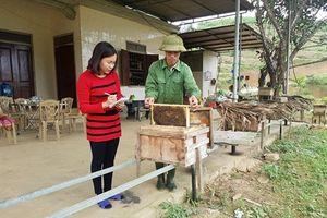 Liên kết nuôi ong
