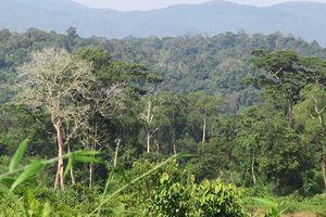 Bình Thuận: Tăng cường phòng cháy, chữa cháy rừng trong cao điểm mùa khô