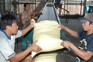 Xuất khẩu gạo tiếp tục khởi sắc