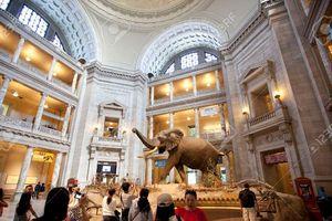 Khách thăm quan bảo tàng sẽ được miễn phí trong Ngày Quốc tế Bảo tàng