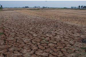 Mùa khô sẽ còn kéo dài tại Ninh Thuận tới tháng 9/2018